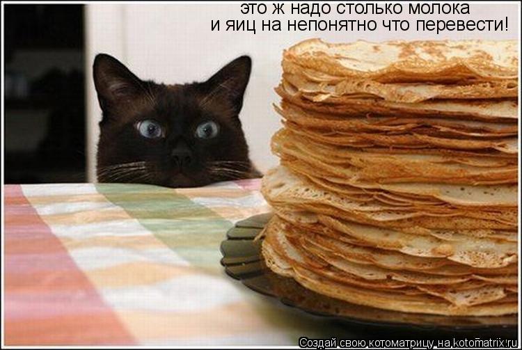 Котоматрица: это ж надо столько молока  и яиц на непонятно что перевести!
