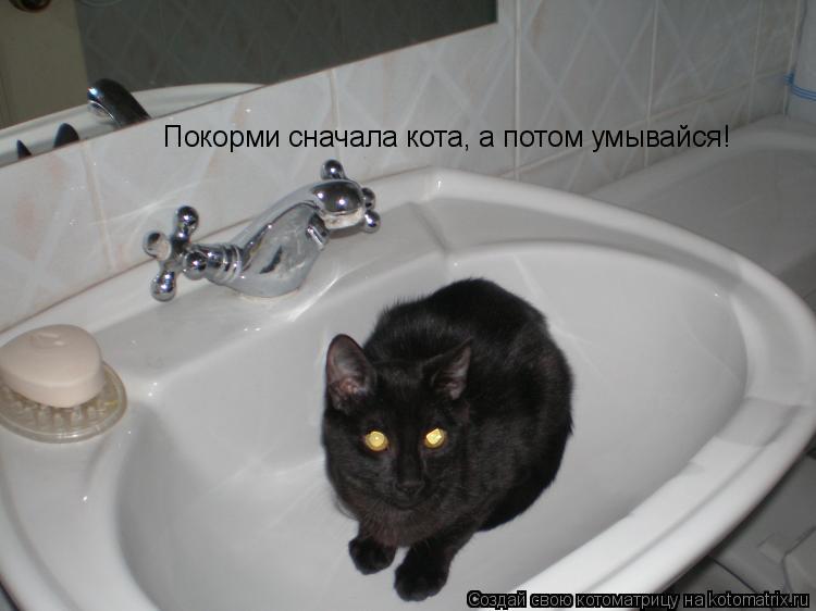Котоматрица: Покорми сначала кота, а потом умывайся!