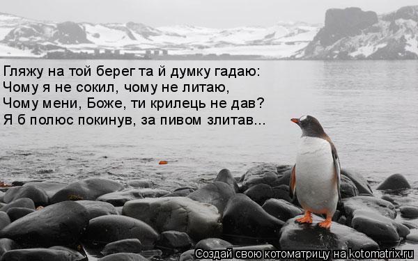 Котоматрица: Гляжу на той берег та й думку гадаю: Чому я не сокил, чому не литаю,  Чому мени, Боже, ти крилець не дав?  Я б полюс покинув, за пивом злитав...