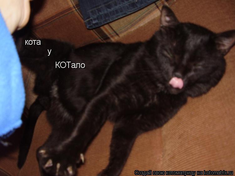 Котоматрица: кота  у  КОТало