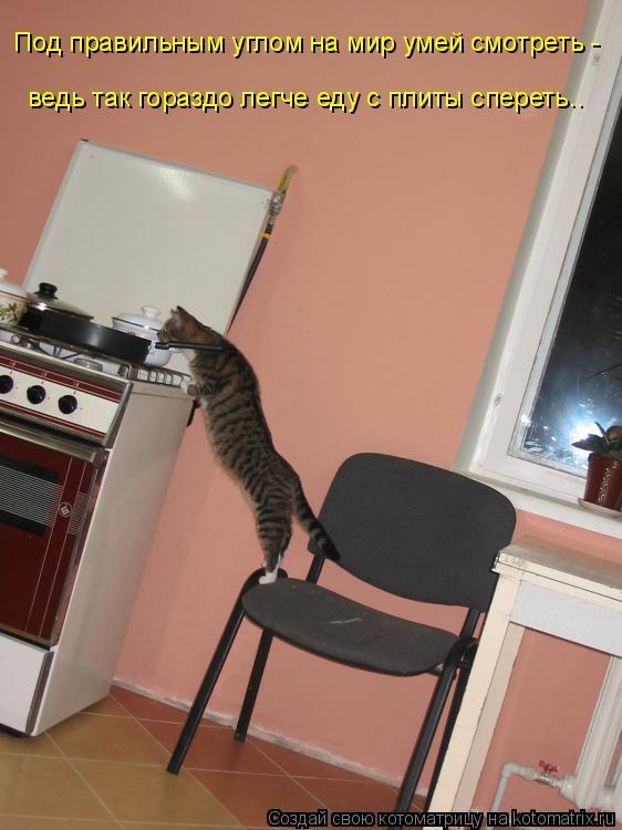 Котоматрица: Под правильным углом на мир умей смотреть -  ведь так гораздо легче еду с плиты спереть..