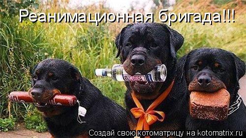 Котоматрица - Реанимационная бригада!!!