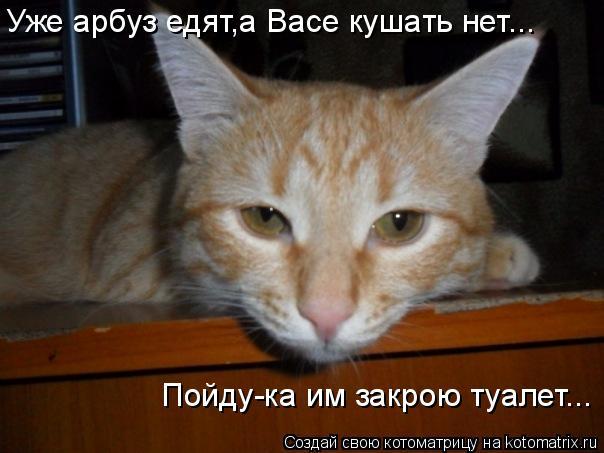 Котоматриця!)))) - Страница 7 950071
