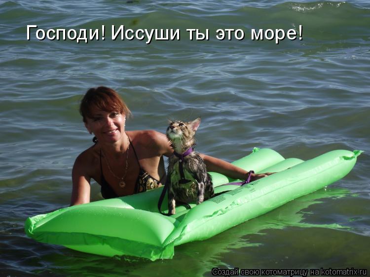 Котоматриця!)))) - Страница 7 950798
