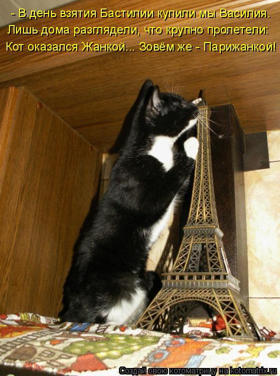 Котоматрица: - В день взятия Бастилии купили мы Василия. Лишь дома разглядели, что крупно пролетели: Кот оказался Жанкой... Зовём же - Парижанкой!