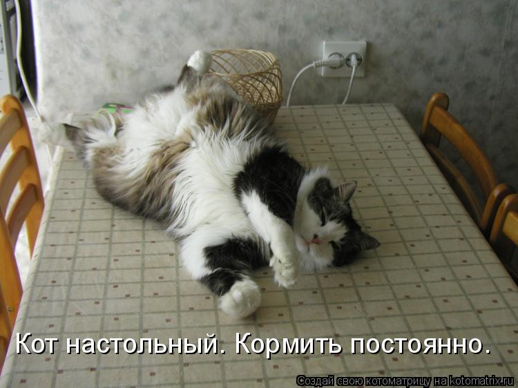 Котоматрица: Кот настольный. Кормить постоянно.