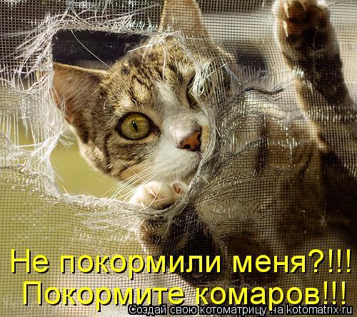 http://kotomatrix.ru/images/lolz/2011/07/14/950866.jpg