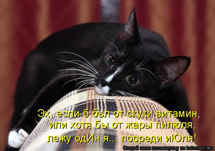 Котоматрица: Эх, если б бьл от скуки витамин, или хотя бы от жары пилюля, лежу одИн я... посреди иЮля!