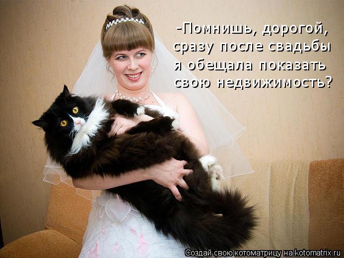 Котоматрица: -Помнишь, дорогой,  сразу после свадьбы  я обещала показать  свою недвижимость?