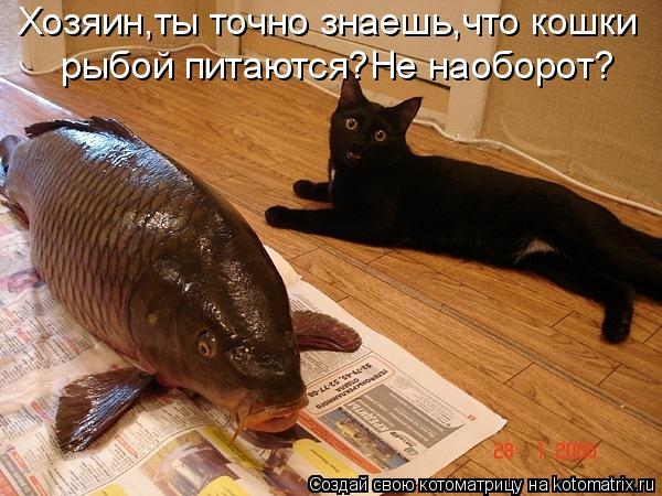Котоматрица: Хозяин,ты точно знаешь,что кошки рыбой питаются?Не наоборот?