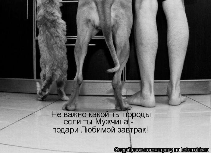 Котоматрица: Не важно какой ты породы,  если ты Мужчина -  подари Любимой завтрак!