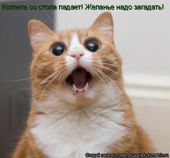 http://kotomatrix.ru/images/lolz/2011/07/15/951202.jpg