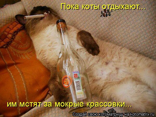 Котоматрица: Пока коты отдыхают... им мстят за мокрые крассовки им мстят за мокрые крассовки...