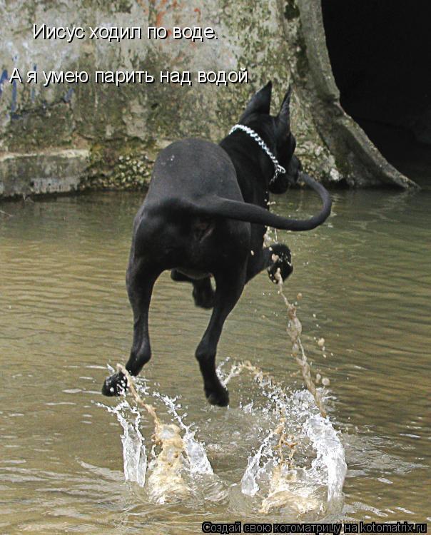 Котоматрица: Иисус ходил по воде. А я умею парить над водой