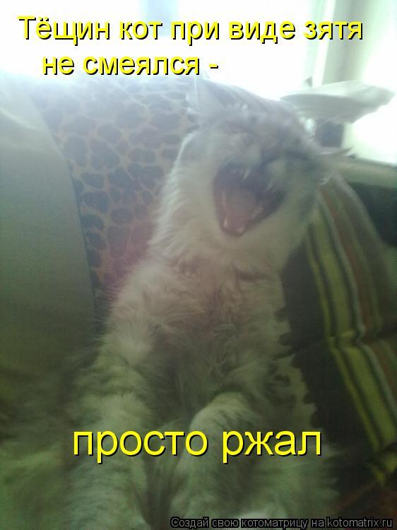 Котоматрица: Тёщин кот при виде зятя не смеялся - просто ржал