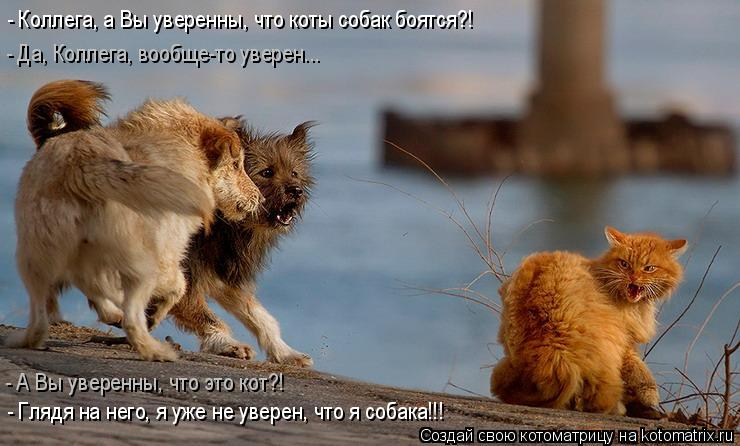 Котоматрица: - Коллега, а Вы уверенны, что коты собак боятся?! - Глядя на него, я уже не уверен, что я собака!!! - Да, Коллега, вообще-то уверен... - А Вы уверенны
