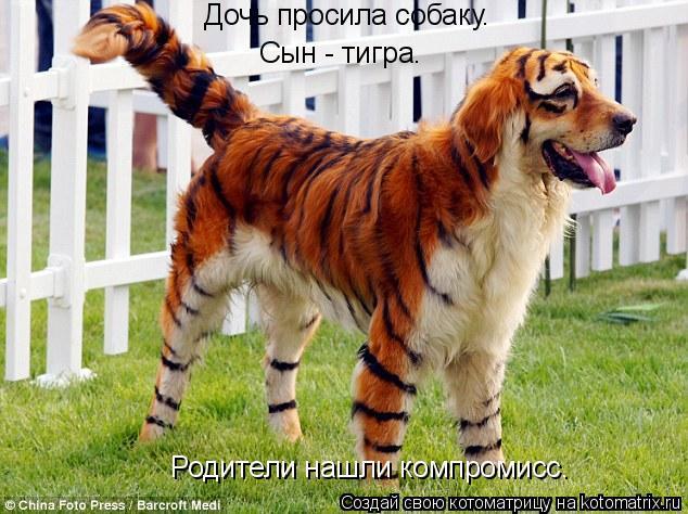 Котоматрица: Дочь просила собаку. Дочь просила собаку. Сын - тигра. Родители нашли компромисс.