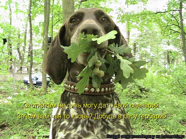 Котоматрица: Охотникам на дичь могу дать свой сценарий. Зачем вам чья то кровь? Добудь в лесу гербарий...