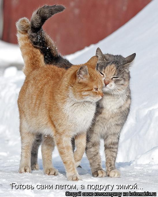 Котоматрица: Готовь сани летом, а подругу зимой...