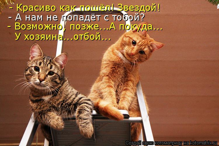 Котоматрица: - Красиво как пошёл! Звездой! - А нам не попадёт с тобой? - Возможно, позже...А покуда... У хозяина...отбой...