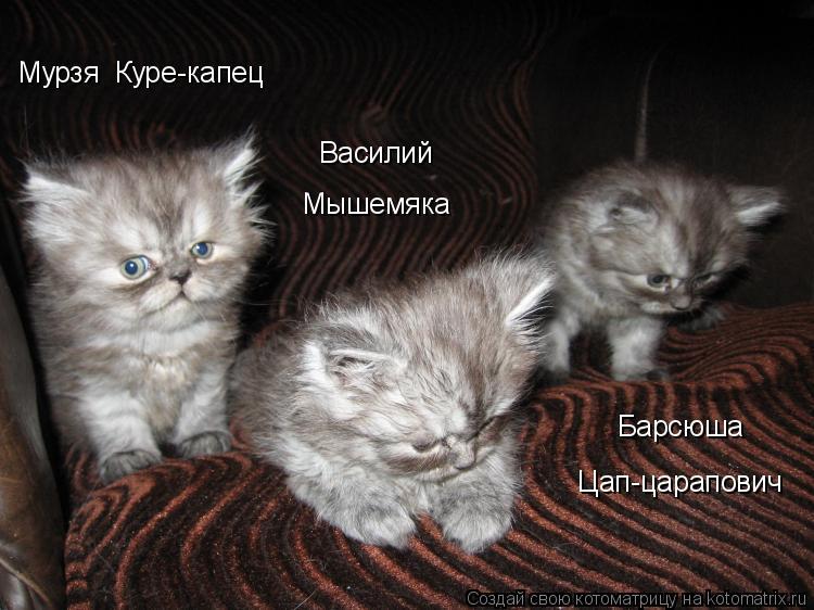 Котоматрица: Мурзя  Куре-капец Василий  Мышемяка Барсюша Цап-царапович