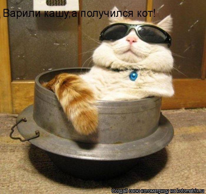 Котоматрица: Варили кашу,а получился кот!