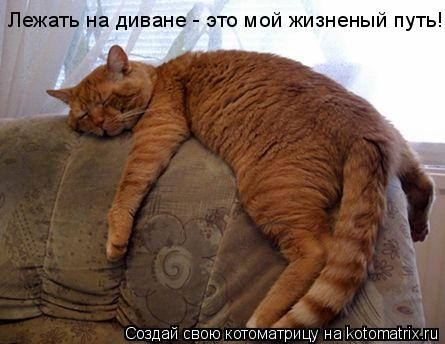 Котоматрица: Лежать на диване - это мой жизненый путь!