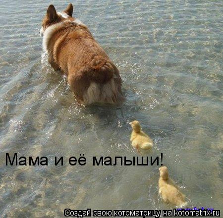 Котоматрица: Мама и её малыши!