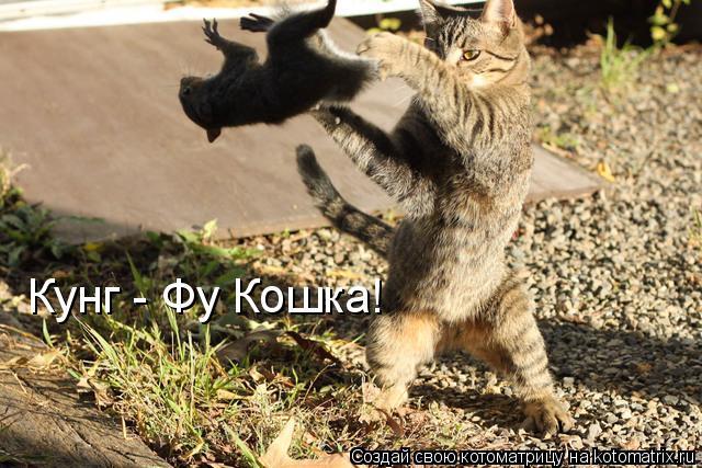 Котоматрица: Кунг - Фу Кошка!