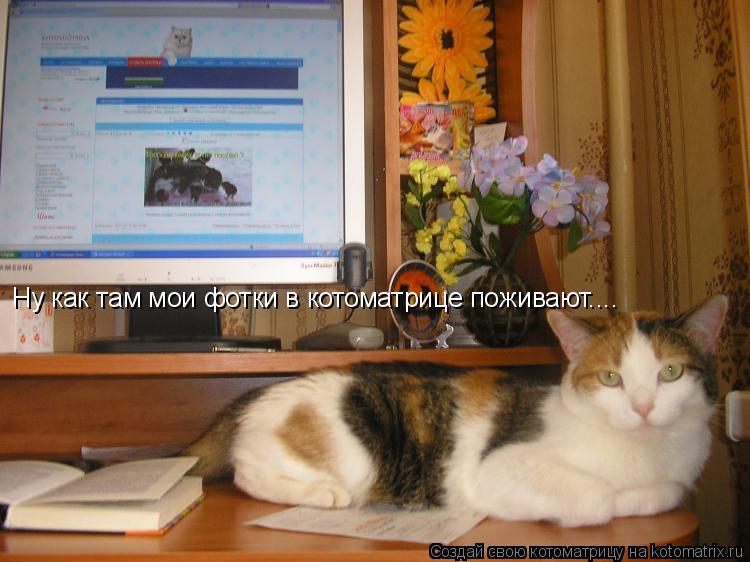 Котоматрица: Ну как там мои фотки в котоматрице поживают....