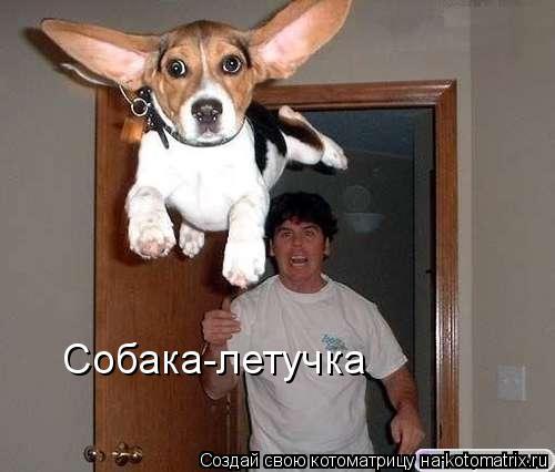 Котоматрица: Собака-летучка
