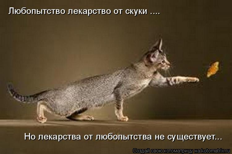 Котоматрица: Любопытство лекарство от скуки .... Но лекарства от любопытства не существует...