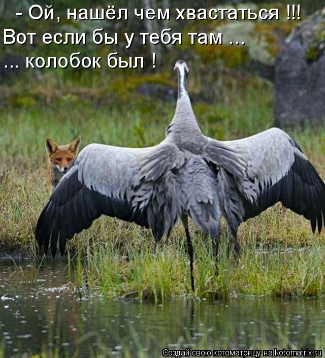 Котоматриця!)))) - Страница 7 952149