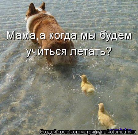 Котоматрица - Мама,а когда мы будем учиться летать?