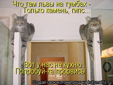 Котоматрица - Что там львы на тумбах -  Только камень, гипс... Вот у нас на кухню...
