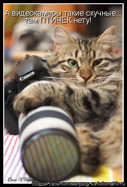 Котоматрица: А видеокамеры такие скучные... там ПТИЧЕК нету!