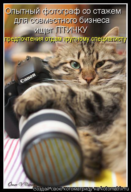 Котоматрица: Опытный фотограф со стажем для совместного бизнеса  ищет ПТИЧКУ предпочтения отдам крупному специалисту