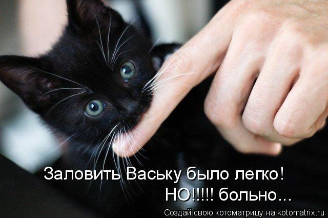 Котоматрица: Заловить Ваську было легко! НО!!!!! больно...