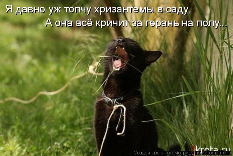 Котоматрица - Я давно уж топчу хризантемы в саду, А она всё кричит за герань на полу