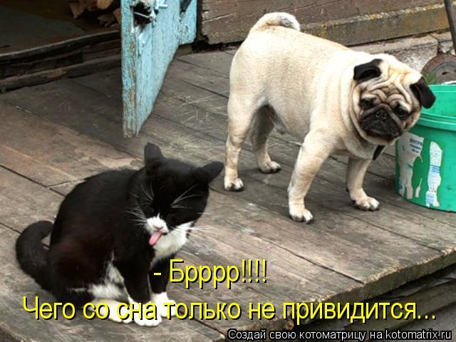 Котоматриця!)))) - Страница 7 952889