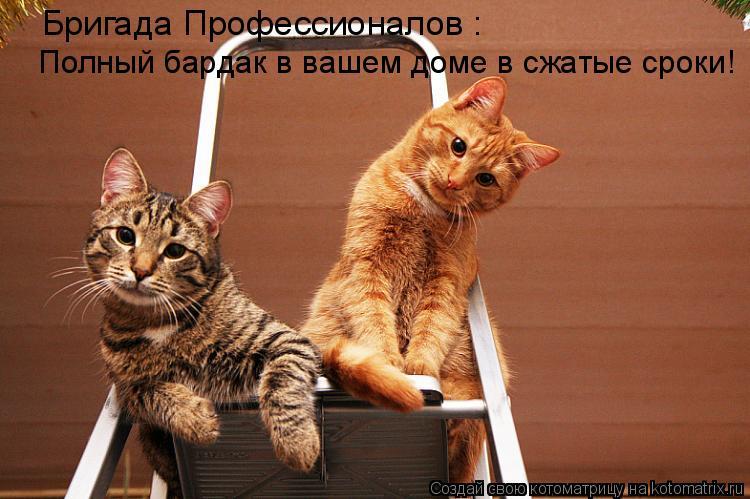 Котоматрица - Бригада Профессионалов : Полный бардак в вашем доме в сжатые сроки!
