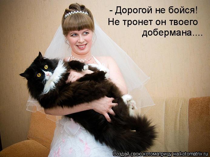 Котоматрица: - Дорогой не бойся!  Не тронет он твоего добермана....