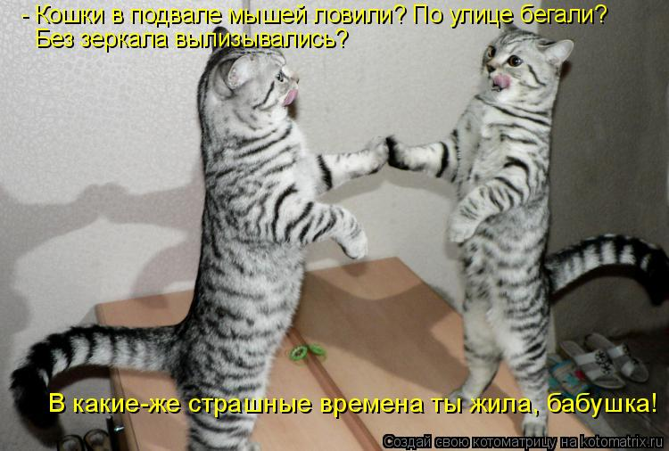 Котоматрица: - Кошки в подвале мышей ловили? По улице бегали? Без зеркала вылизывались? В какие-же страшные времена ты жила, бабушка!