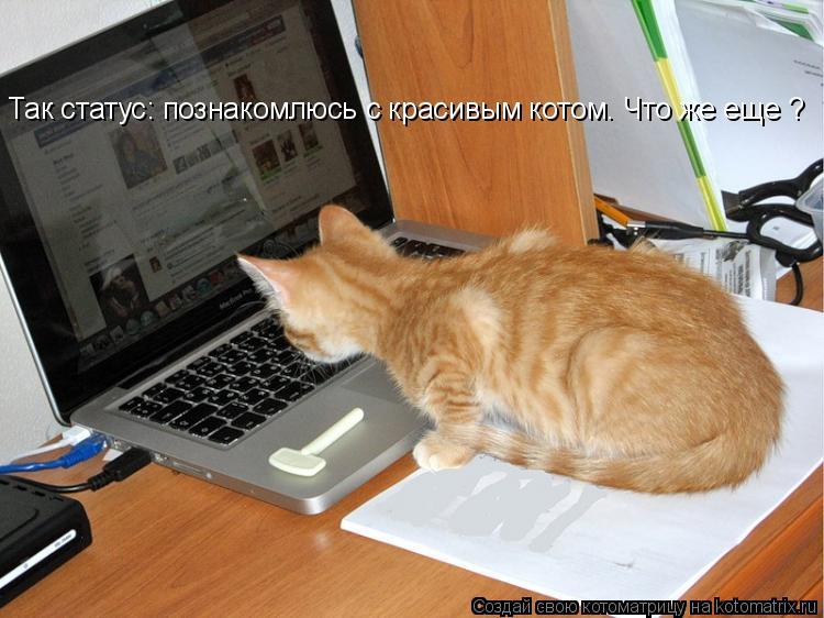 Котоматрица: Так статус: познакомлюсь с красивым котом. Что же еще ?