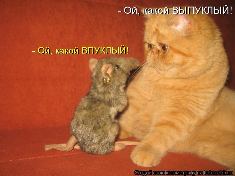 Котоматрица - - Ой, какой ВПУКЛЫЙ! - Ой, какой ВЫПУКЛЫЙ!