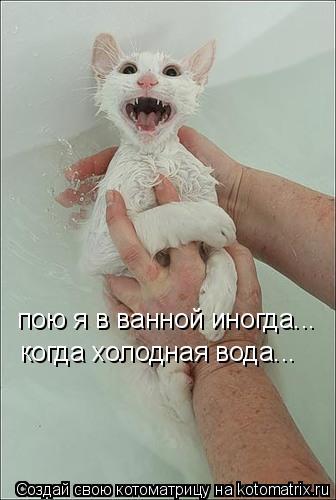 Котоматрица: пою я в ванной иногда... когда холодная вода...