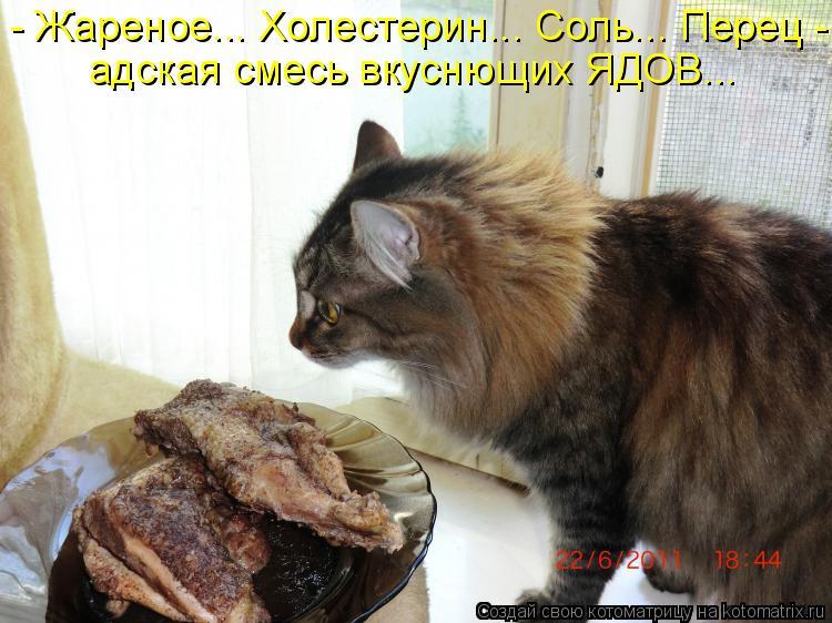 Котоматрица - - Жареное... Холестерин... Соль... Перец -  адская смесь вкуснющих ЯДО