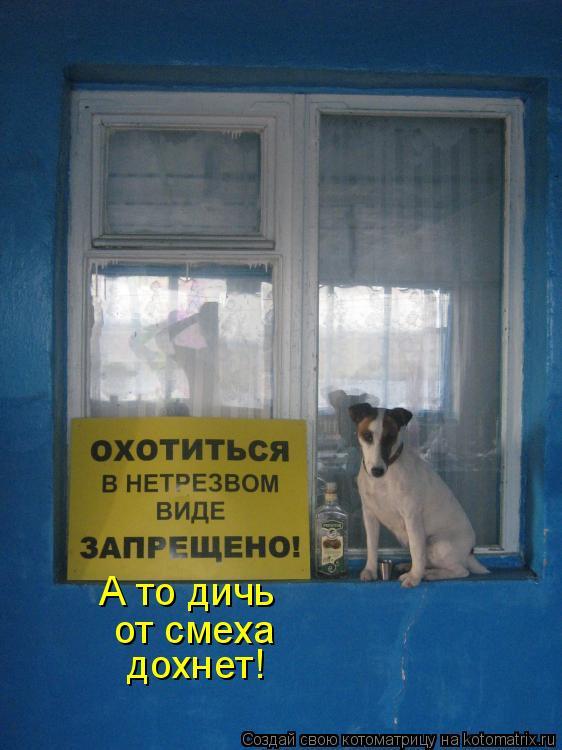 Котоматриця!)))) - Страница 7 953982