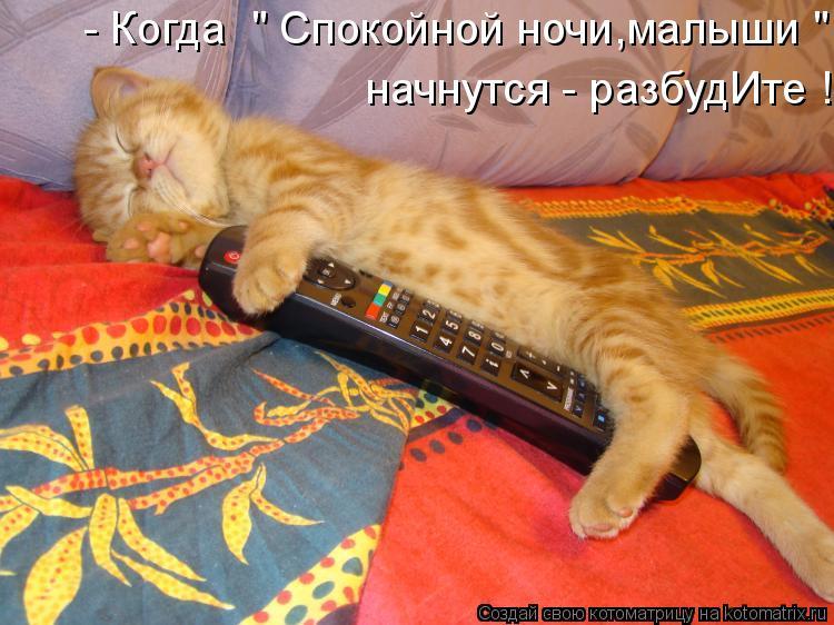 """Котоматрица: - Когда  """" Спокойной ночи,малыши """"  начнутся - разбудИте !"""