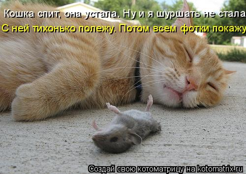 Котоматрица: Кошка спит, она устала. Ну и я шуршать не стала. С ней тихонько полежу. Потом всем фотки покажу!